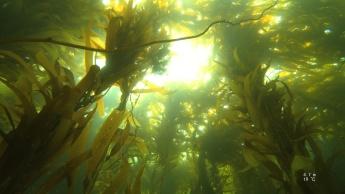 Kelp!!