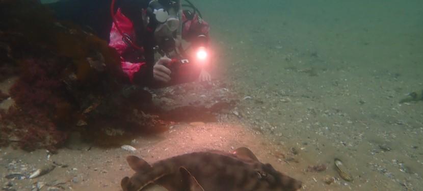 Advanced Adventure Diver